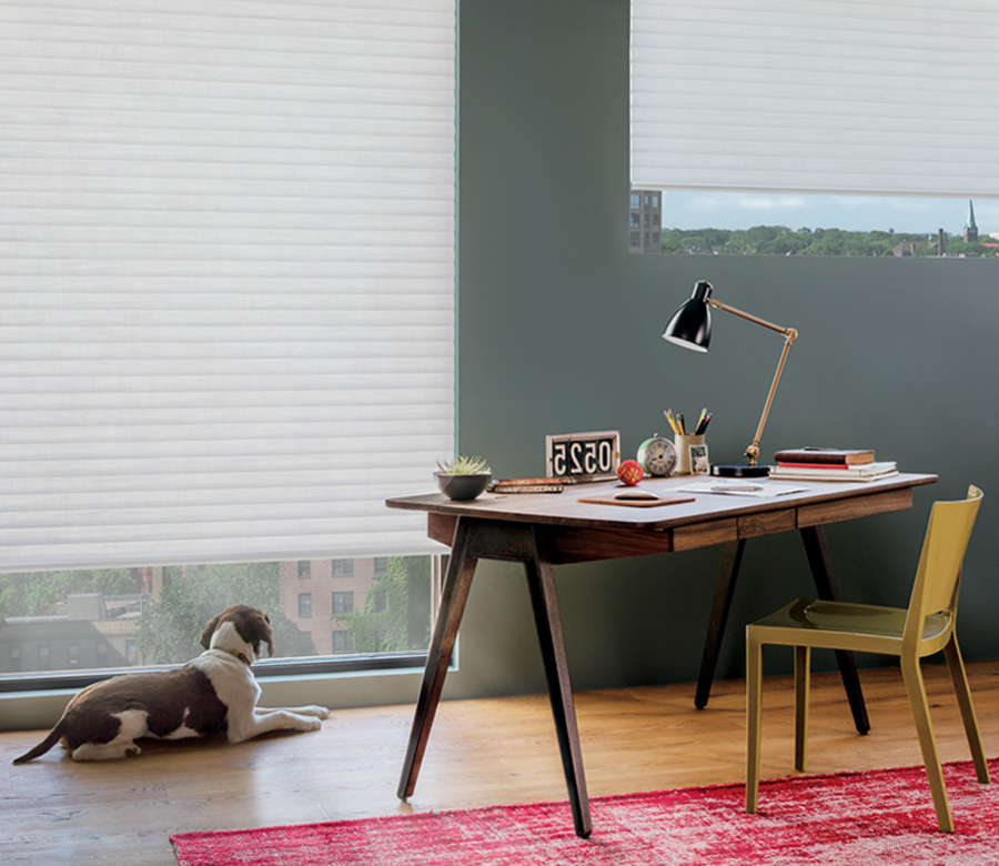 urban office with dog and hunter douglas insulating shades on floor to ceiling windows 34102