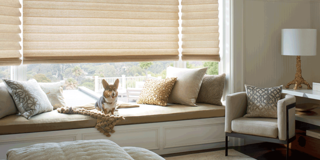 what dog owners understand pet safe blinds Fort Myers 33908