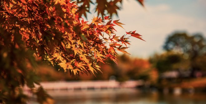 Fall foliage in Florida during the changing season.