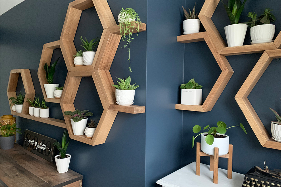 feature wall plants pop of blue